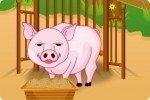 Soigner les petits cochons